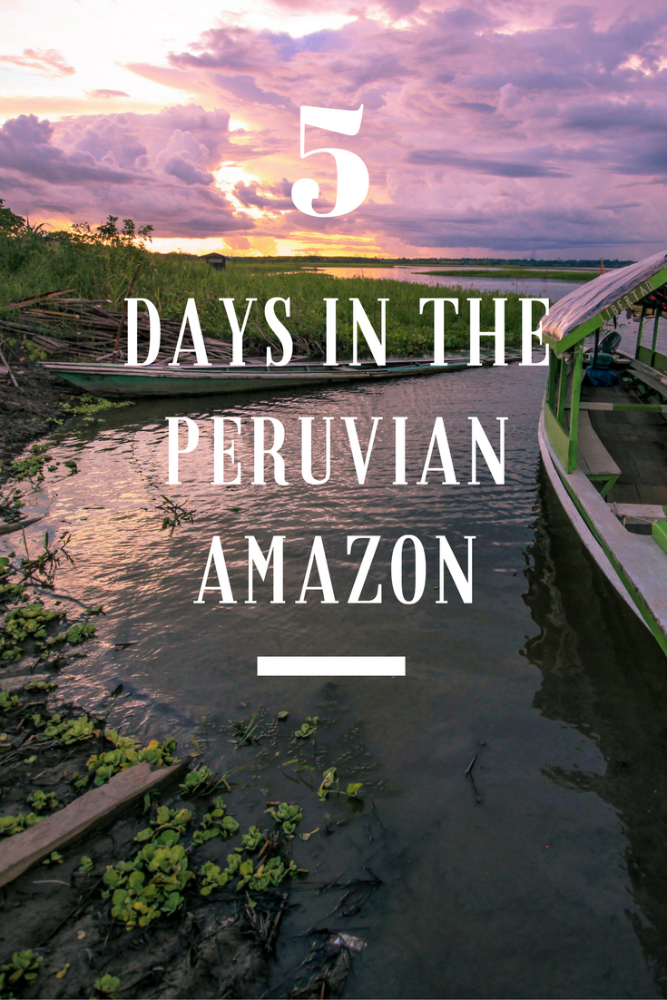 The Amazon Peru: Jungle walks, piranha fishing, searching for caimans, tarantulas and sloths - read about our epic adventures during our 5 days!