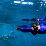 8 Reasons to Swim With Whale Sharks In The Ningaloo Reef, Australia