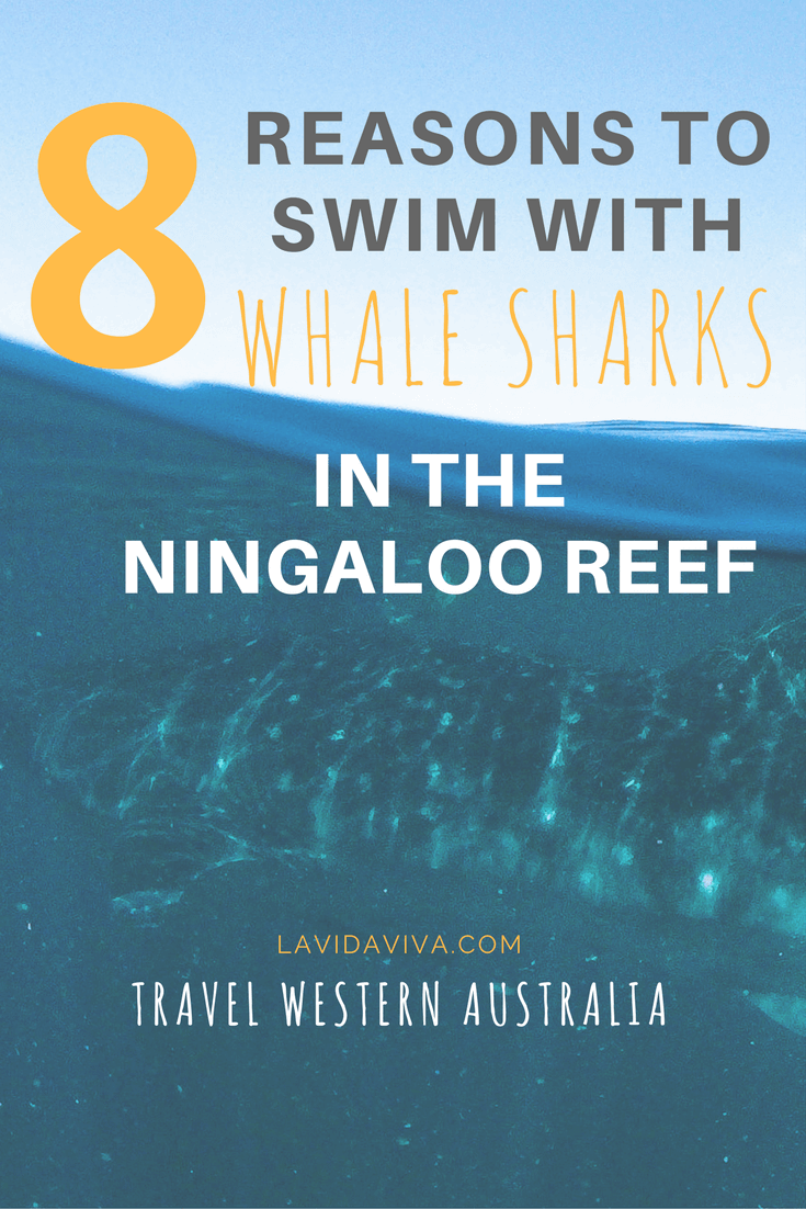 Want to swim with whale sharks? The Ningaloo Reef in Western Australia is THE BEST place to do it. Here are 8 reasons why.