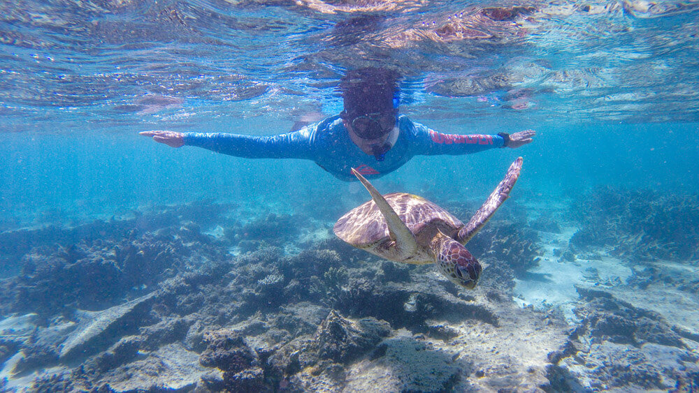 Swim with turtles in the Ningaloo Reef in Exmouth or Coral Bay