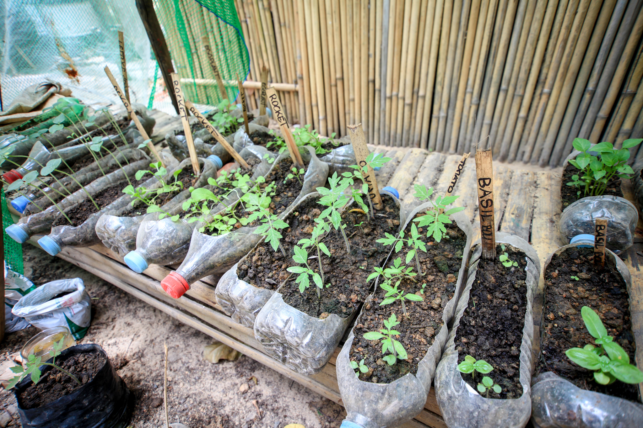 Small vegetable patch at Hammock homstay hostel
